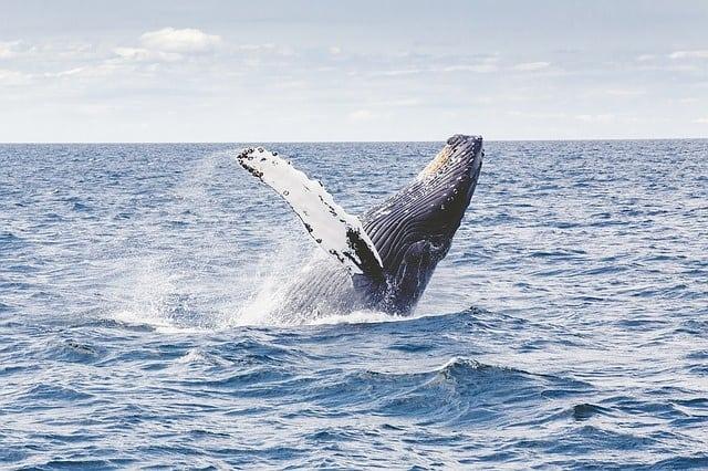 Persoonlijke Ontmoeting Walvissen